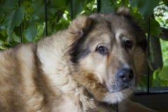 Portrait eines braunen Hundes Stockbild