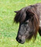 Portrait eines braunen Pferds in einer Wiese Lizenzfreies Stockfoto