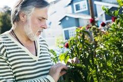Portrait eines fälligen Mannes im Garten stockbilder