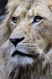 Portrait eines Königs Stockfotografie