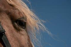 Portrait eines Lieblingspferds Stockbild
