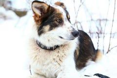 Portrait eines netten Hundes Stockfotografie