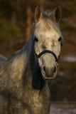 Portrait eines Pferds Stockfotos