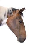 Portrait eines Pferds Stockbild