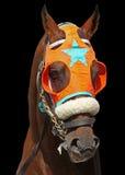 Portrait eines Rennen-Pferds Stockfotografie