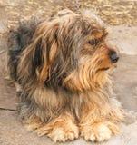 Portrait eines schönen Hundes Stockfotografie
