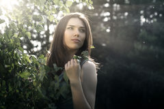 Portrait eines Schönheit Brunette Stockfoto