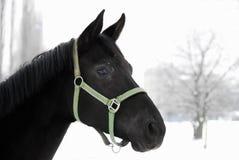Portrait eines schwarzen Pferds im Winter Lizenzfreie Stockfotos