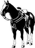 Portrait eines stehenden Pferds Lizenzfreies Stockfoto