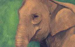 Portrait of the elephant. With abstract background Stock Image