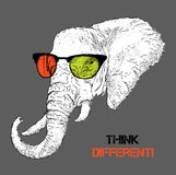 Portrait of the elephant in the colored glasses. Think different. Vector illustration. Stock Image