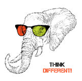 Portrait of the elephant in the colored glasses. Think different. Vector illustration. Royalty Free Stock Image