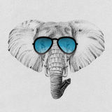 Portrait of elephant drawn by hand in pencil in sunglasses Royalty Free Stock Photo