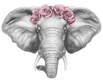 Portrait of Elephant with floral head wreath. Royalty Free Stock Photos
