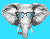 Portrait of Elephant with glasses. Royalty Free Stock Photo