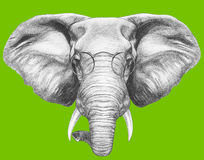 Portrait of Elephant with glasses. Royalty Free Stock Image