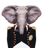 Portrait of Elephant in military uniform. Stock Photos