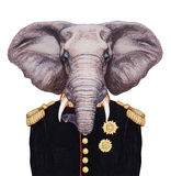 Portrait of Elephant in military uniform. Stock Image