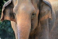 Portrait of elephant showering Stock Photo
