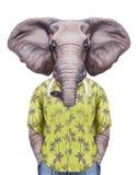 Portrait of Elephant in summer shirt. Stock Photo