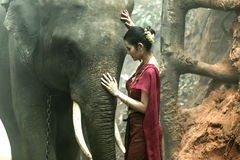 Portrait elephant with woman in traditional dress