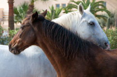 Portrait of embracing horses. Royalty Free Stock Photos
