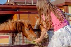 Portrait extérieur de jeune cheval de alimentation de sourire de fille d'enfant sur le fa Photographie stock libre de droits