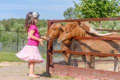 Portrait extérieur de jeune cheval de alimentation de sourire de fille d'enfant sur le fa Photos stock