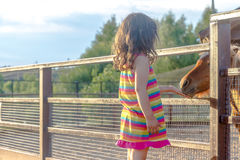Portrait extérieur de jeune cheval de alimentation de sourire de fille d'enfant sur le fa Images stock