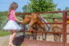 Portrait extérieur de jeune cheval de alimentation de sourire de fille d'enfant sur le fa Photographie stock