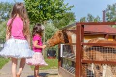 Portrait extérieur de jeune cheval de alimentation de sourire de fille d'enfant sur le fa Images libres de droits
