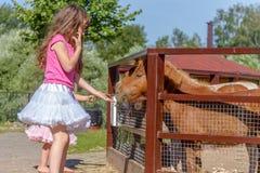 Portrait extérieur de jeune cheval de alimentation de sourire de fille d'enfant sur le fa Photos libres de droits