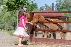 Portrait extérieur de jeune cheval de alimentation de sourire de fille d'enfant sur le fa Image stock