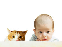 Portrait of face funny caucasian newborn toddler baby boy with red cat isolated on white Stock Images
