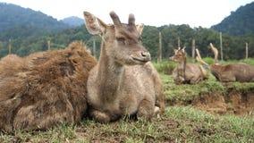 Portrait of family of deer Stock Photos