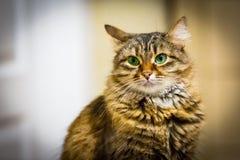 Portrait funny cat Stock Images