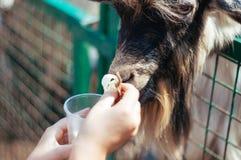 Portrait of a farm animal in an aviary summer royalty free stock photos