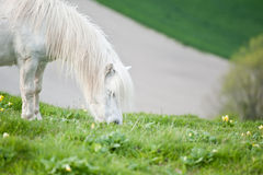 Portrait of farm horse animal. In rural farming landscape stock images