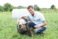 Portrait Of Farmer In Field With Pig. Farmer In Field With Pig Royalty Free Stock Photos