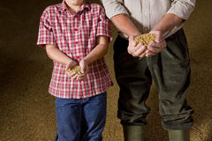 Portrait of farmer and grandson holding wheat grains Stock Images