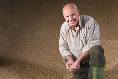 Portrait of farmer holding wheat grains Stock Photo
