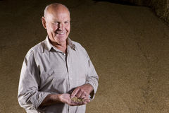 Portrait of farmer holding wheat grains Stock Image