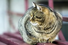 Portrait of a fat striped cat with green eyes Stock Photos