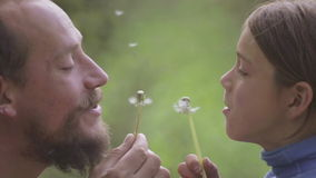 Portrait of a father and son with a flower dandelion. The bearded father playing with his son. The bearded man with a child blowing on a dandelion stock footage