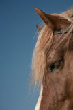 Portrait of a favourite horse Royalty Free Stock Photography