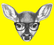 Portrait of Fawn with glasses. Stock Images