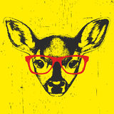 Portrait of Fawn with glasses. Royalty Free Stock Photography