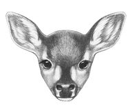 Portrait of Fawn. Royalty Free Stock Photos