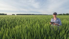 Portrait of a female farmer with a tablet in hand. Standing in the middle of a wheat field. stock photo