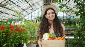 Portrait of female farmer walking in greenhouse with box of organic vegetables. Looking around and smiling. Autumn harvest, people and lifestyle concept stock footage